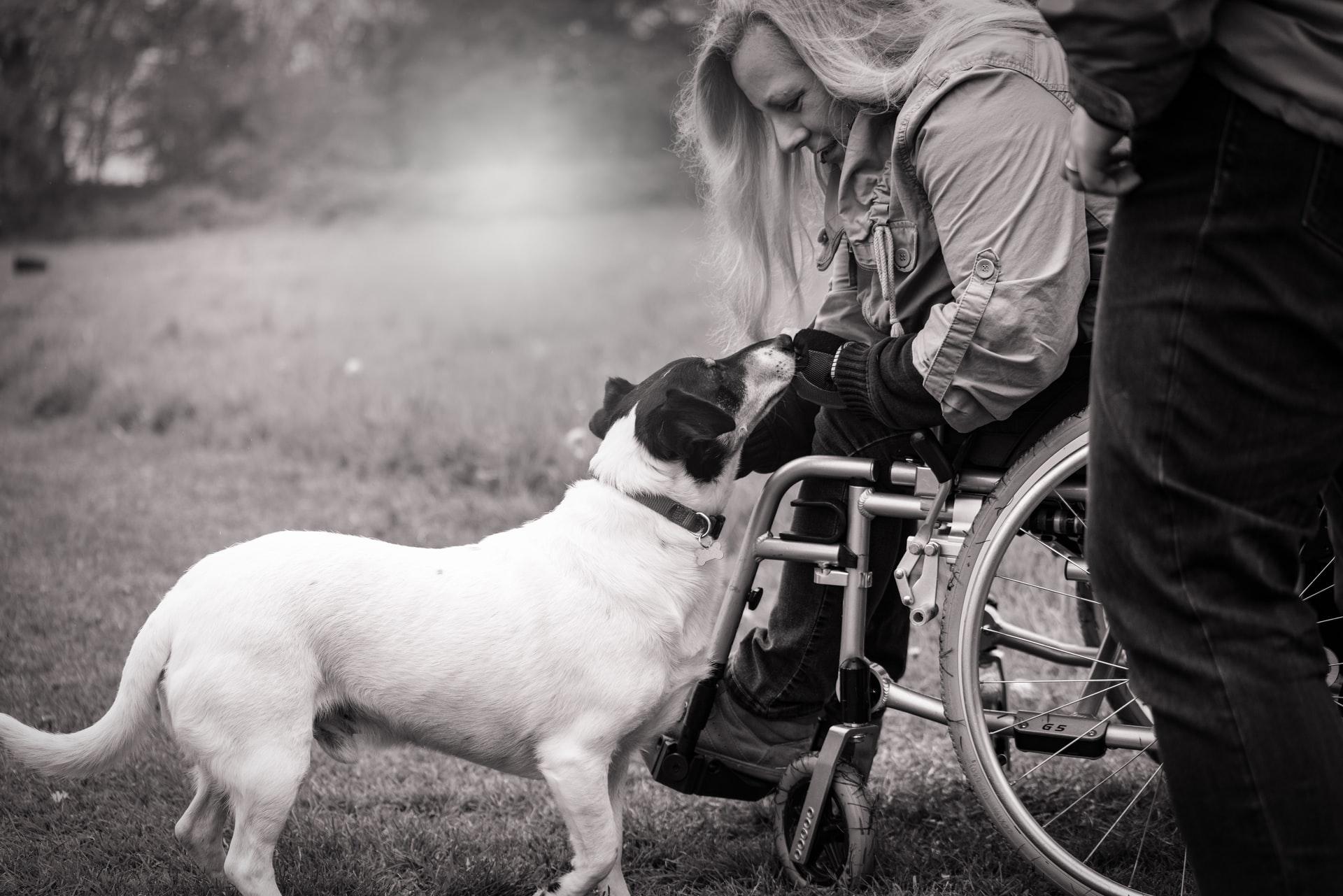Dog woman wheelchair